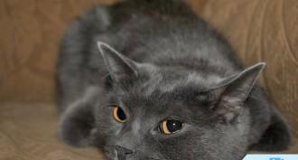 Yavru Kedi Bakımı Nasıl Yapılır?