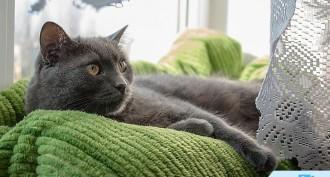 Kedi Bakımı Nasıl Yapılır?