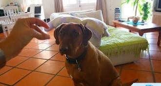 Evde Köpek Bakımı Nasıl Yapılır?