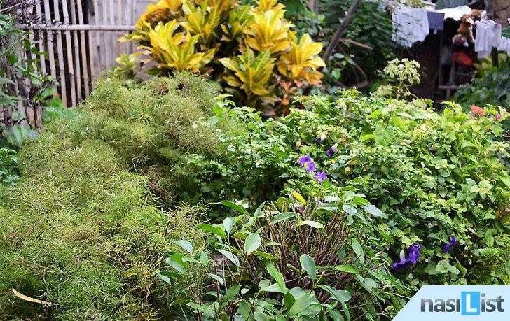 bahçe düzenleme nasıl yapılır