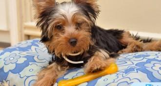 Evcil Hayvan Bakımı Nasıl Yapılır?